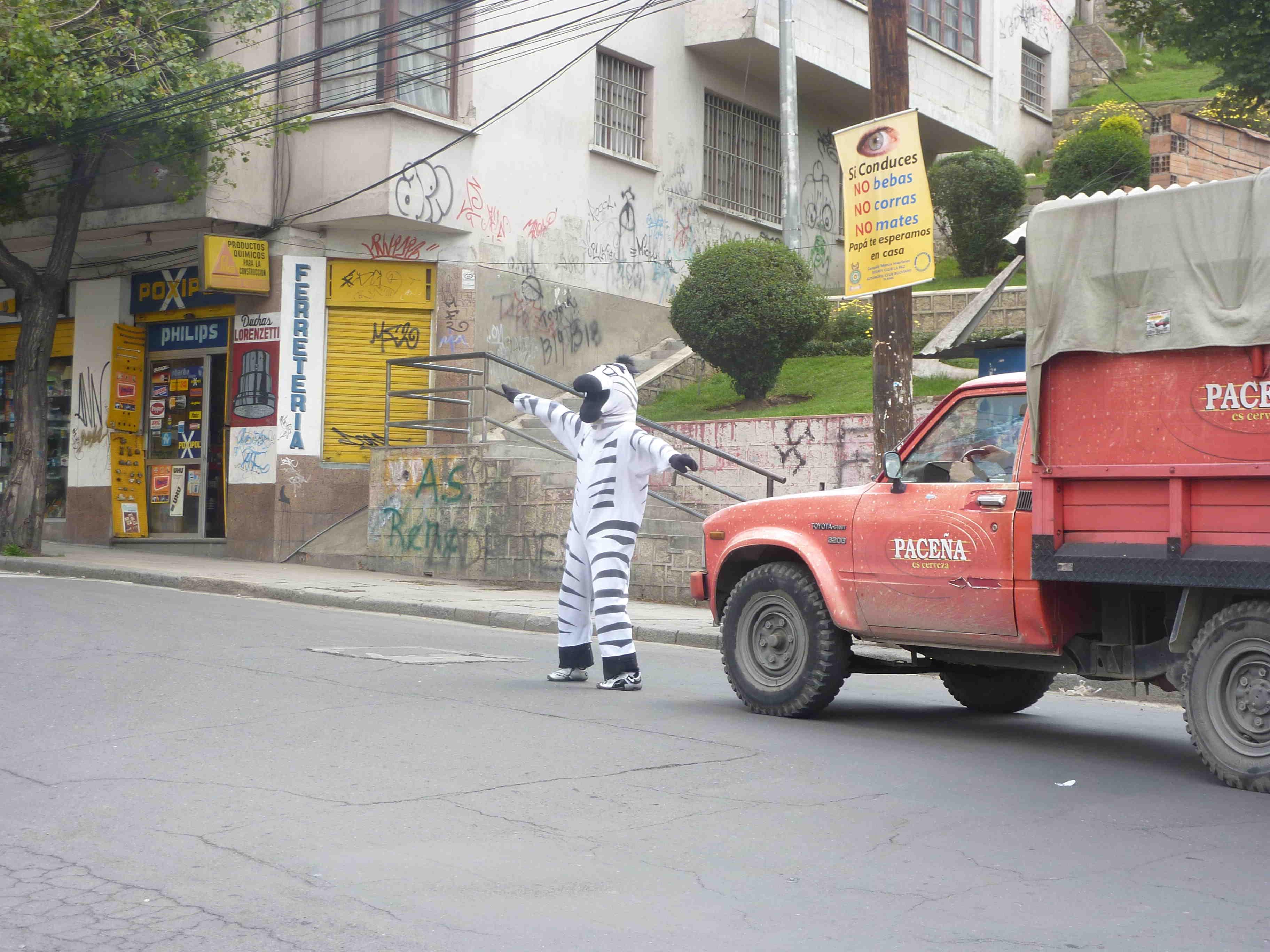 Zebra directing traffic on the streets of La Paz