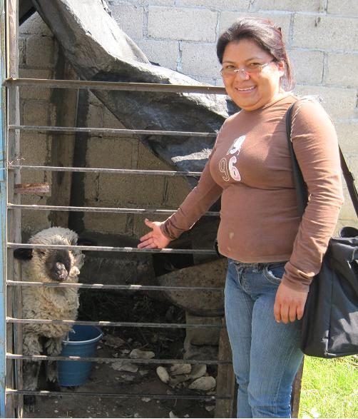 Loan Officer in Mexico with a Borrega - cross between a goat and a sheep