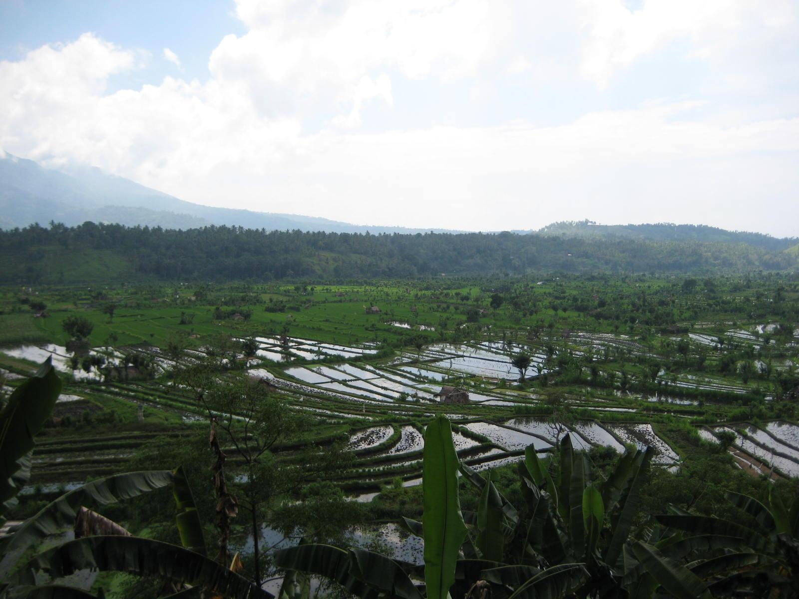 Rice paddies on the way to Bunutan
